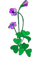 flower embroidery designs