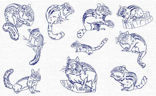 Chipmunks embroidery designs